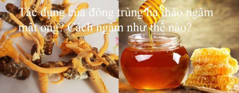 Đông trùng hạ thảo ngâm mật ong